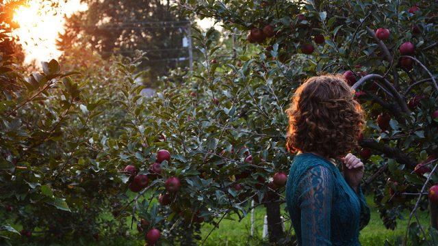 L'auto-cueillette des pommes du Québec chez nos coups de cœur