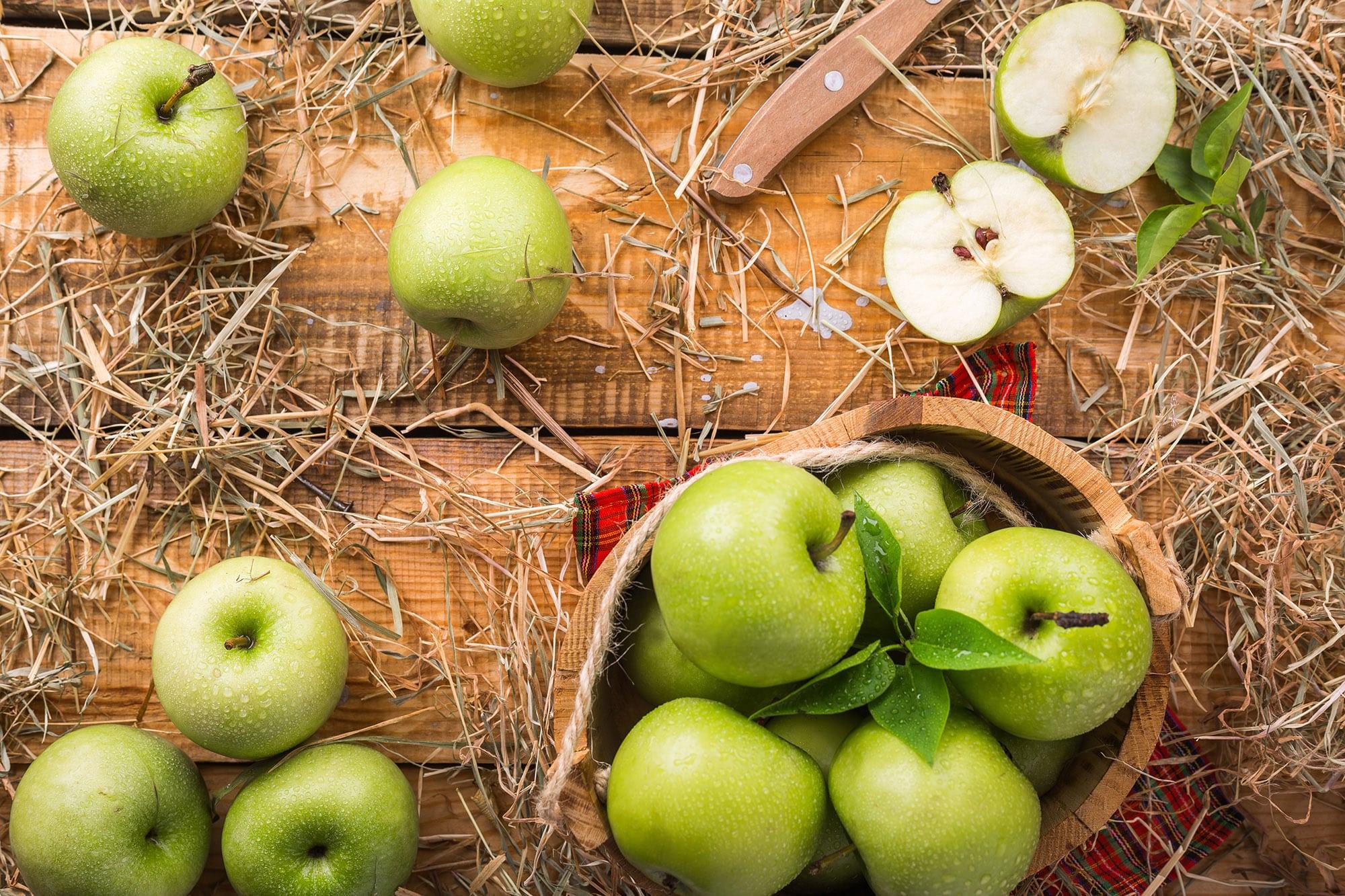 La frénésie du temps des pommes - Vergers du Québec